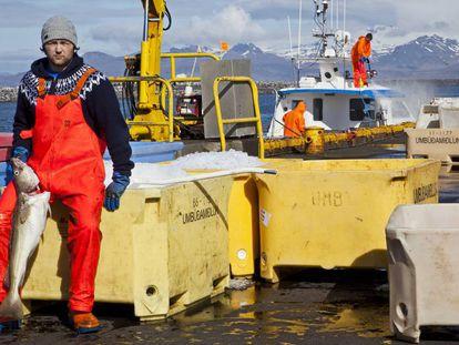 Pescadores de bacalao en el puerto de Reikiavik (Islandia).