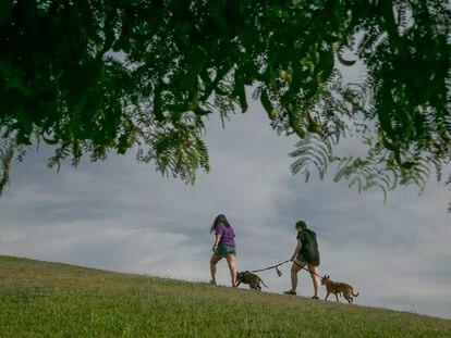 La familia de acogida pase a 'Buddy' y a su otra perra, 'Zeta'.