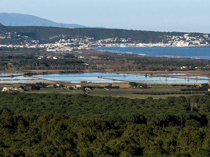 Pinares que forman un conector ecológico en el municipio de Pals.