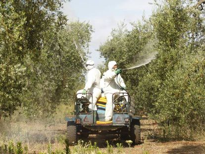 Dos trabajadores fumigan con abono líquido olivos en Pilas (Sevilla).