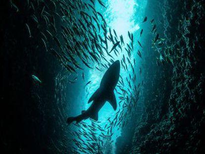 El mayor informe sobre biodiversidad, auspiciado por la ONU, advierte del impacto de la acción humana