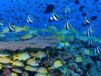La lucha contra el cambio climático ha motivado la decisión de salvaguardar una zona con más de 7.000 especies marinas