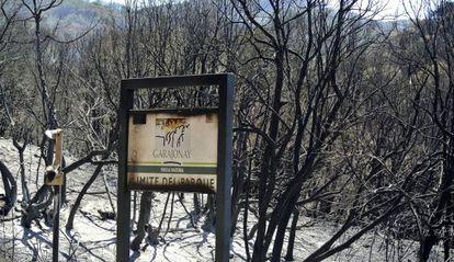 Terreno quemado en Vallehermoso, a la entrada del Parque Nacional de Garajonay.