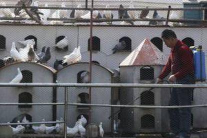 Un trabajador chino desinfecta un palomar, como medida de prevención contra la gripe aviar, en la ciudad portuaria de Qingdao, al este de China, en 2019.