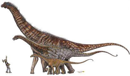 Comparación entre dinosaurios brasileños, de menor a mayor: Gondwanatitan faustoi (8 metros), Maxakalisaurus topai (13 metros) y Austroposeidon magnificus (25 metros).