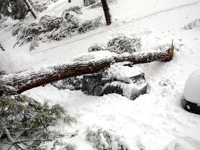 Un árbol sobre un coche por el temporal 'Filomena', en una calle de Madrid, el pasado sábado.