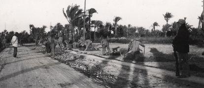 Trabajos de adecuación de caminos y plantación de palmeras en los alrededores del campo de trabajo republicano de Albatera en una imagen inédita tomada en otoño de 1938.