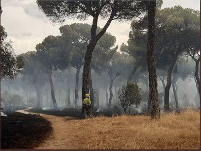 Un bombero trabaja en las tareas de extinción del incendio de El Tiemblo.