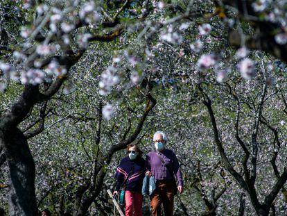Una pareja pasea por un parque con cerezos en flor en Madrid.