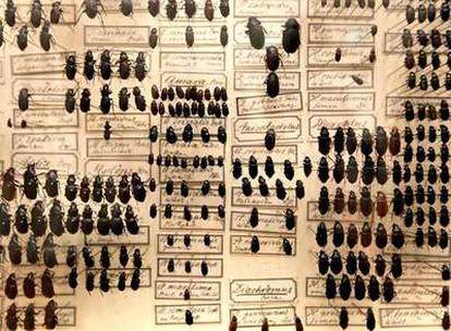Escarabajos fotografiados en la exposición <i>Darwin. El arte y la búsqueda de los orígenes,</i> que se celebra en el museo Schirn de Francfort.