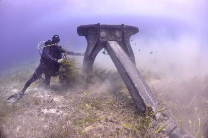 Un submarinista comprueba los daños causados por un ancla en posidonias de Ses Salines.