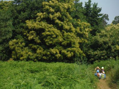 Varios niños antes de adentrarse en un castañar.