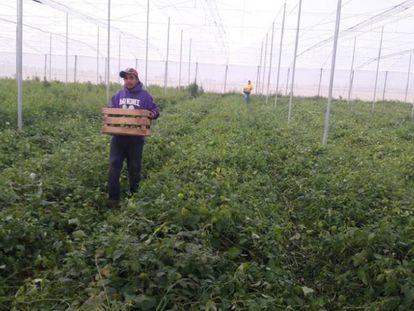Uno de los proyectos productivos de la organización Alma en Zacatecas donde trabajan migrantes deportados.