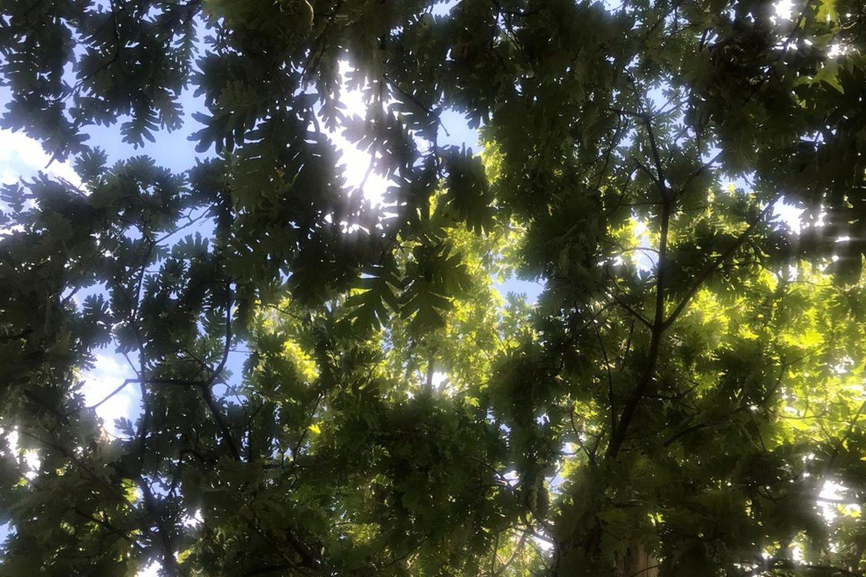 Los tres consejos del bosque para recuperar el tiempo perdido | Ciencia | EL  PAÍS