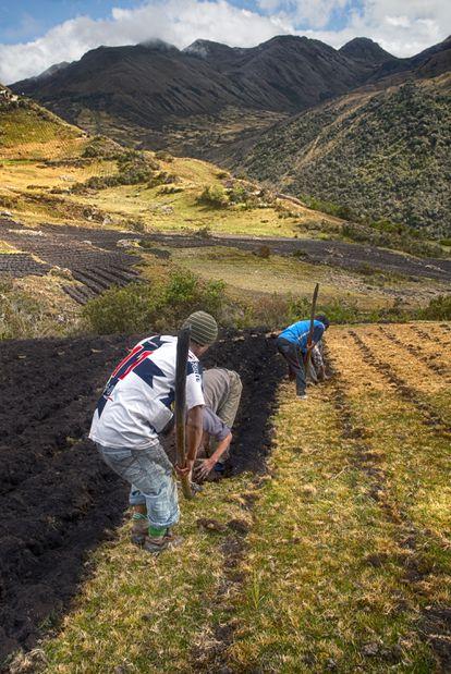 Plantar papas en terrenos inclinados, lo que permite el paso del agua de lluvia.