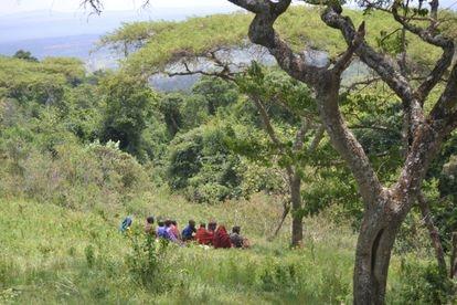 Reunión de mujeres masai bajo una acacia africana en Lendikinya, una aldea del distrito de Monduli, en el noroeste de Tanzania.