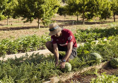 Joan, uno de los trabajadores de los campos de cultivo de Son Fortesa.