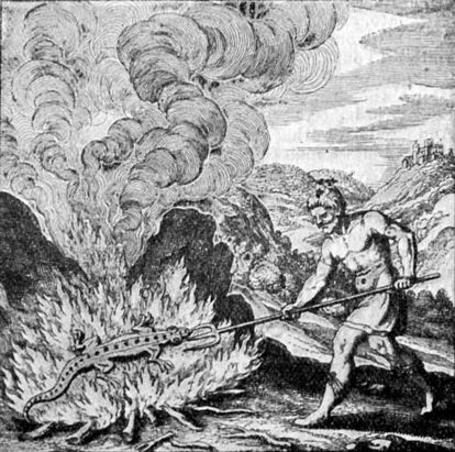A salamander on fire, in a print from a book on alchemy.