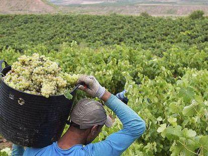 En algunas zonas la producción de uva puede reducirse un 66%.