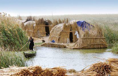En las zonas pantanosas del sur de Irak, los ma'dans llevan desde el año 4000 antes de Cristo construyendo con juncos. Hace medio siglo eran medio millón. Hoy, 10.000.