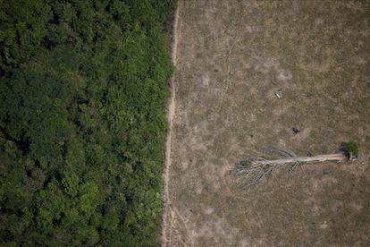 Aerial image of an area cut down in the Amazon by loggers and farmers, in 2020.