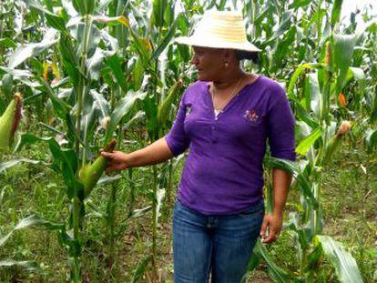 En Honduras, uno de los países más golpeados por el cambio climático, la resiliencia tiene rostro de mujer campesina