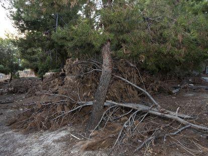 Árboles caídos y ramas partidas este jueves en el parque de Santa Eugenia, esta semana en Vallecas.