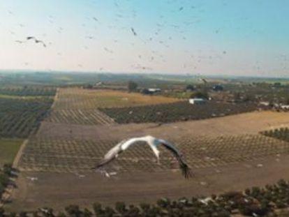 El aparato grabó a más de 100 aves bajo la supervisión de un biólogo