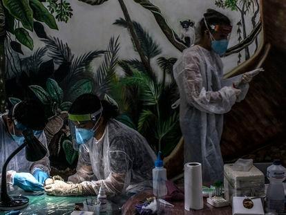 Un equipo de parasitólogos analizan muestras en el centro de investigación del parque de Samauma, en la Amazonia.