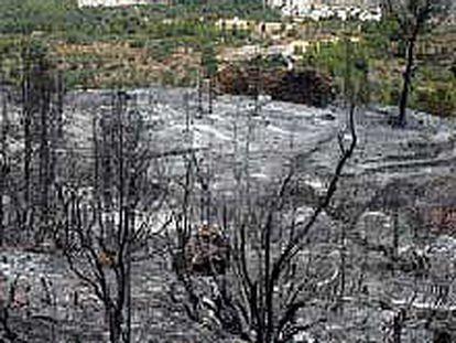 Efectos del fuego sobre una de las zonas próximas a Parcent.