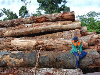 La tala de árboles, aún la selectiva, puede reducir a la mitad la biodiversidad de un bosque