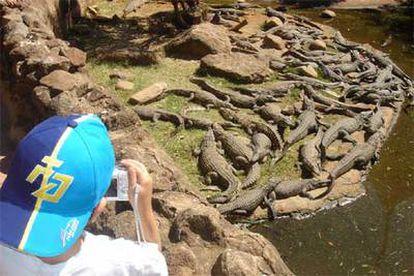 Un niño observa y retrata a los animales de uno de los estanques de la granja de los cocodrilos, en Sun City (Suráfrica).