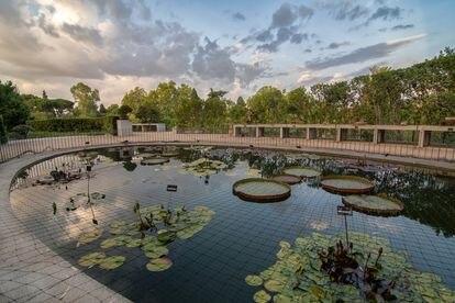 Estanque del Jardín Botánico, en el centro, las hojas de Victoria 'Longwood Hybrid'.