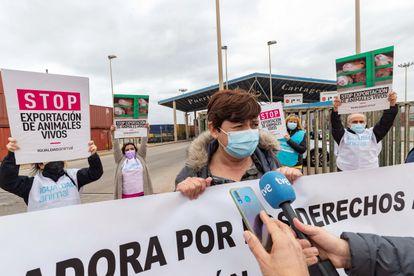 Miembros de Igualdad Animal protestan por la situación de las reses a bordo del 'Karim Allah', el 27 de febrero en el puerto de Cartagena.