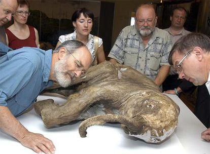 El cadáver de mamut congelado