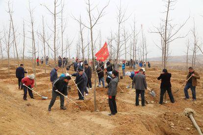 Decenas de personas plantan árboles en Rizhao, en la provincia china de Shandong, en marzo de 2016.