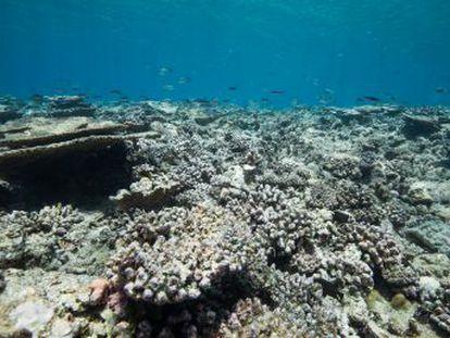 Uno de cada tres peces capturados en todo el mundo nunca llega a consumirse, según un informe de la ONU