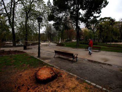 Uno de los árboles talados en El Retiro.