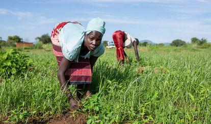 Una mujer trabaja la tierra en Sudán del Sur.