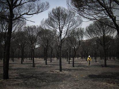 Un bombero camina por Doñana en junio de 2017 tras el incendio que arrasó más de 8.400 hectáreas de este parque natural.