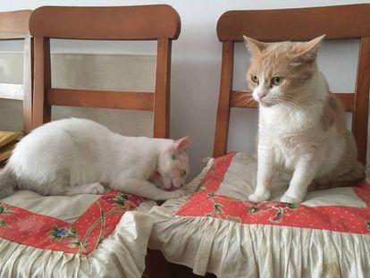 Mía, a la derecha, con cara de pocos amigos. A la izquierda, Atún , con cara de que le importa más bien poco lo que piense su hermana.