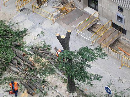 Árboles talados en la calle de Luís Esteban, cerca de la plaza de Castilla.