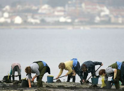 Un grupo de mariscadoras, trabajando en enero de 2007 en la playa del Terrón, Vilanova de Arousa.