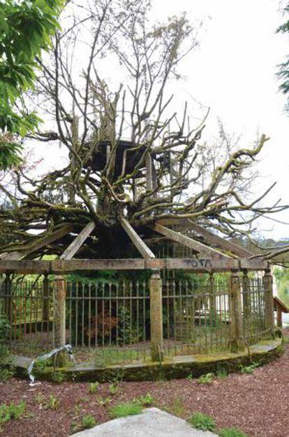 Estado del árbol en Pontedeume