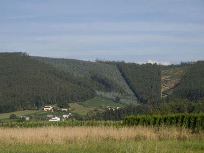 Montes con plantaciones de eucalipto en el término municipal de Ribadeo.