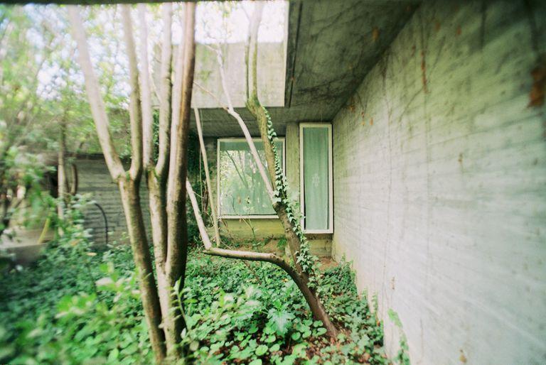 'Verde 3. Enraizar', de la serie de fotografías de la artista Cristina Rodríguez de Acuña sobre la Casa Carvajal, que fue su hogar de adolescencia, y que ahora publica en el fotolibro 'Miradas cruzadas. La Casa Carvajal'.  
