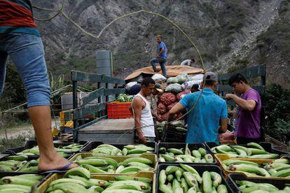 Trabajadores transportan vegetales, en La Grita (Venezuela).