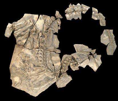 Fósil del nuevo dinosaurio carnívoro 'Concavenator'