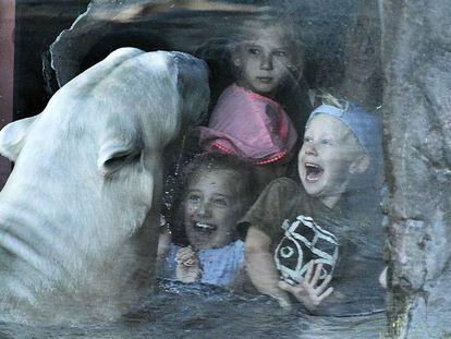 ¿Por qué vamos al zoo?