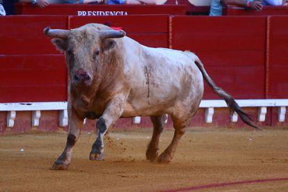 El primero de los toros de Prieto de la Cal, con el que Morante de la Puebla pelearía el sábado.